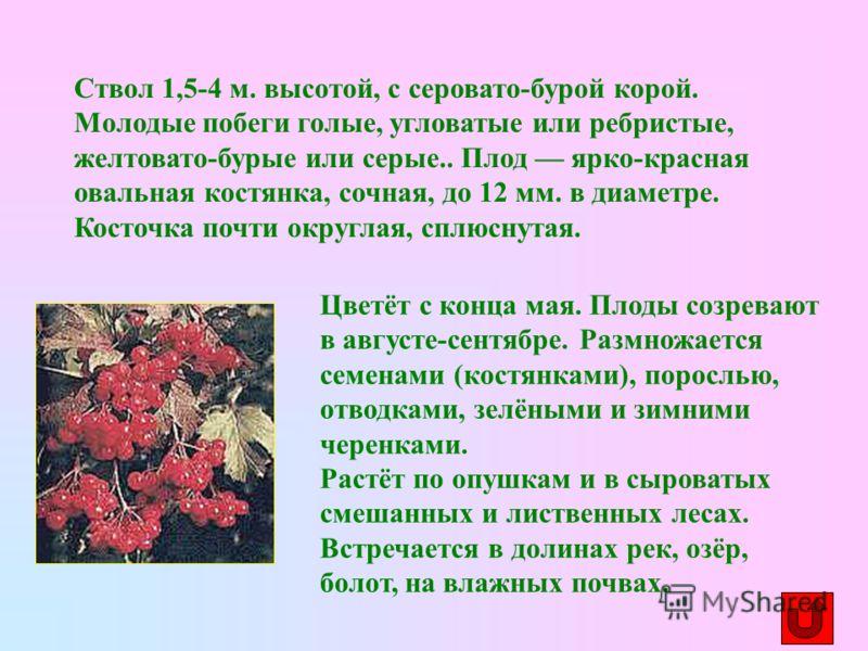 Цветёт с конца мая. Плоды созревают в августе-сентябре. Размножается семенами (костянками), порослью, отводками, зелёными и зимними черенками. Растёт по опушкам и в сыроватых смешанных и лиственных лесах. Встречается в долинах рек, озёр, болот, на вл