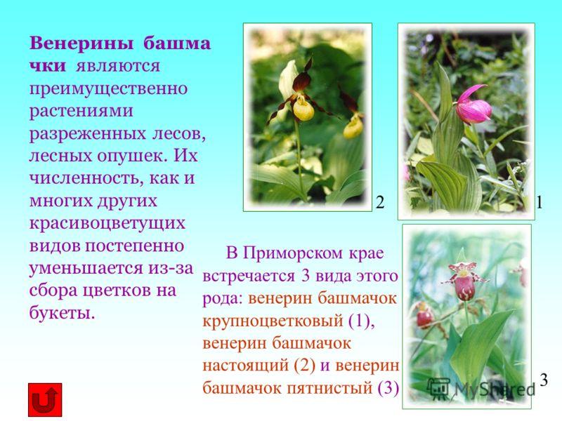 Венерины башма чки являются преимущественно растениями разреженных лесов, лесных опушек. Их численность, как и многих других красивоцветущих видов постепенно уменьшается из-за сбора цветков на букеты. В Приморском крае встречается 3 вида этого рода: