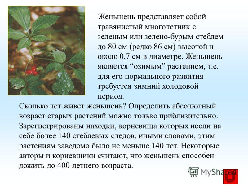 Женьшень представляет собой травянистый многолетник с зеленым или зелено-бурым стеблем до 80 см (редко 86 см) высотой и около 0,7 см в диаметре. Женьшень является озимым растением, т.е. для его нормального развития требуется зимний холодовой период.