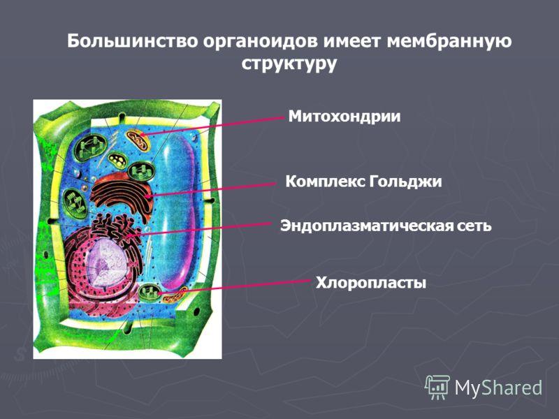 Большинство органоидов имеет мембранную структуру Митохондрии Комплекс Гольджи Эндоплазматическая сеть Хлоропласты