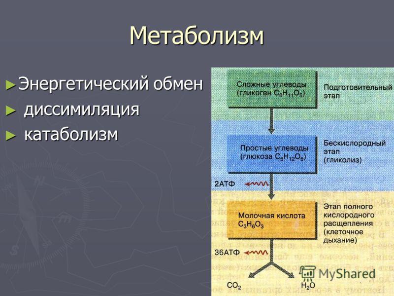 Метаболизм Энергетический обмен Энергетический обмен диссимиляция диссимиляция катаболизм катаболизм