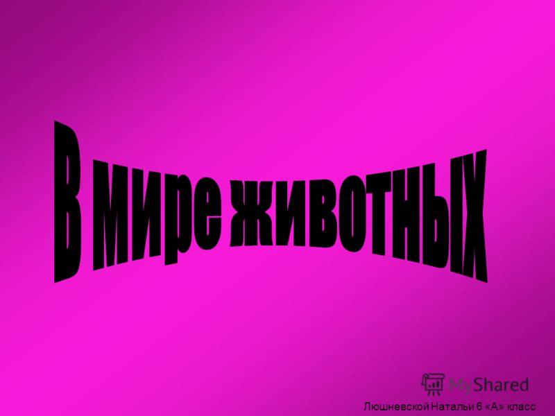 Люшневской Натальи 6 «А» класс