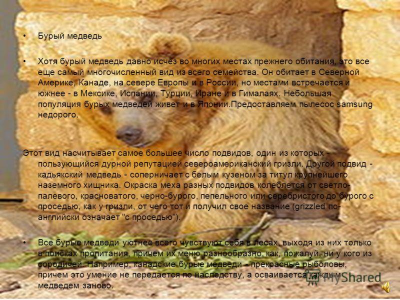 Бурый медведь Хотя бурый медведь давно исчез во многих местах прежнего обитания, это все еще самый многочисленный вид из всего семейства. Он обитает в Северной Америке, Канаде, на севере Европы и в России, но местами встречается и южнее - в Мексике,