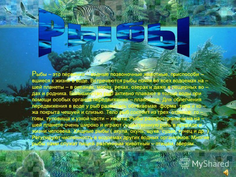 Р ыбы – это первично – водные позвоночные животные, приспособи – вшиеся к жизни в воде. Встречаются рыбы почти во всех водоемах на – шей планеты – в океанах, морях, реках, озерах и даже в пещерных во – дах и родника. Большинство рыб активно плавают в