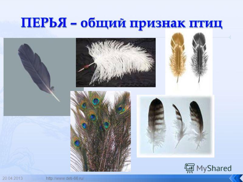 20.04.2013http://www.deti-66.ru/4