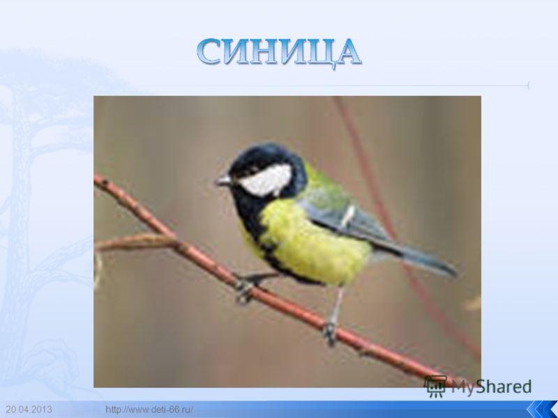 20.04.2013http://www.deti-66.ru/9