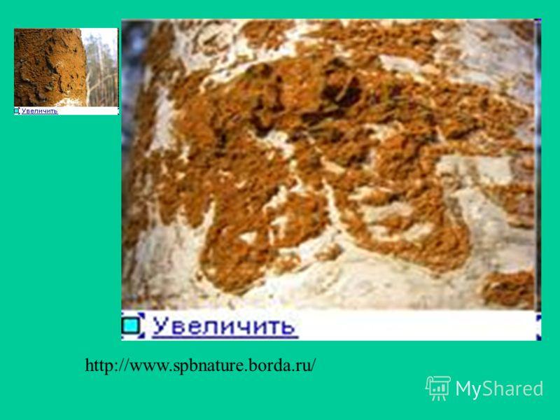 http://www.priroda.otpusk.spb.ru/l