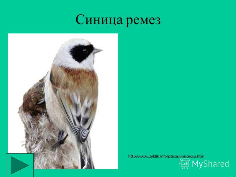 http://www.zyblik.info/pticas/ http://bse.sci-lib.com/