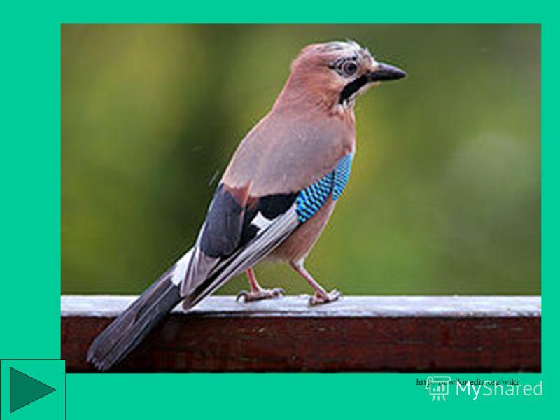 Синица ремез http://www.zyblik.info/pticas/sinicarasp.htm