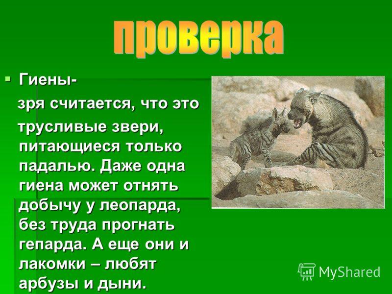 Гиены- Гиены- зря считается, что это зря считается, что это трусливые звери, питающиеся только падалью. Даже одна гиена может отнять добычу у леопарда, без труда прогнать гепарда. А еще они и лакомки – любят арбузы и дыни. трусливые звери, питающиеся