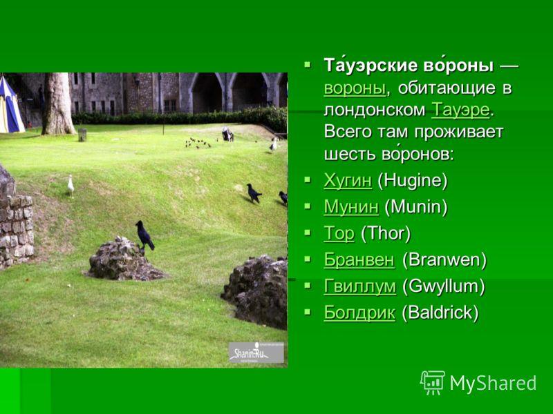 Та́уэрские во́роны вороны, обитающие в лондонском Тауэре. Всего там проживает шесть во́ронов: Та́уэрские во́роны вороны, обитающие в лондонском Тауэре. Всего там проживает шесть во́ронов: вороныТауэре вороныТауэре Хугин (Hugine) Хугин (Hugine) Хугин