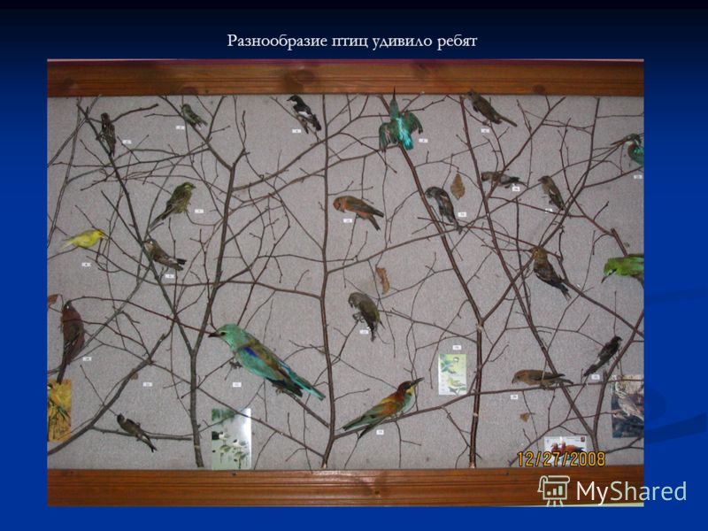 Разнообразие птиц удивило ребят