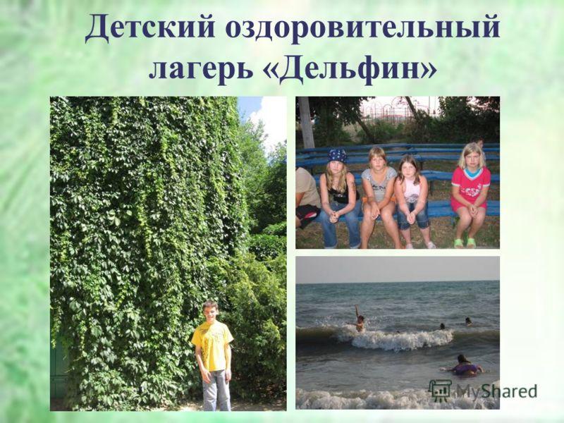 Детский оздоровительный лагерь «Дельфин»