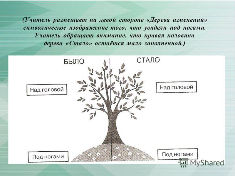 (Учитель размещает на левой стороне «Дерева изменений» символическое изображение того, что увидели под ногами. Учитель обращает внимание, что правая половина дерева «Стало» остаётся мало заполненной.)