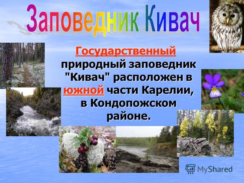 природный заповедник Кивач расположен в южной части Карелии, в Кондопожском районе. Государственный природный заповедник Кивач расположен в южной части Карелии, в Кондопожском районе. южнойГосударственный южной