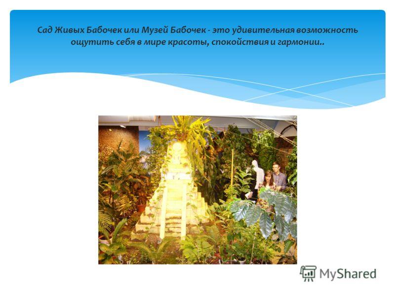 Сад Живых Бабочек или Музей Бабочек - это удивительная возможность ощутить себя в мире красоты, спокойствия и гармонии..