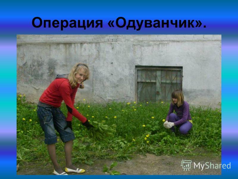 Операция «Одуванчик».