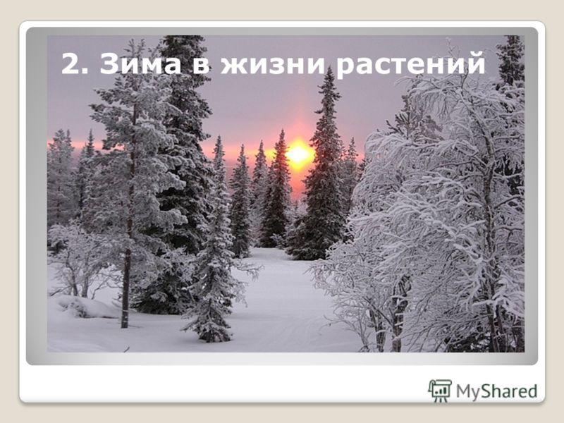 2. Зима в жизни растений