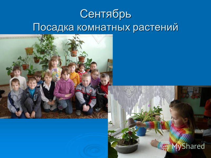 Сентябрь Посадка комнатных растений