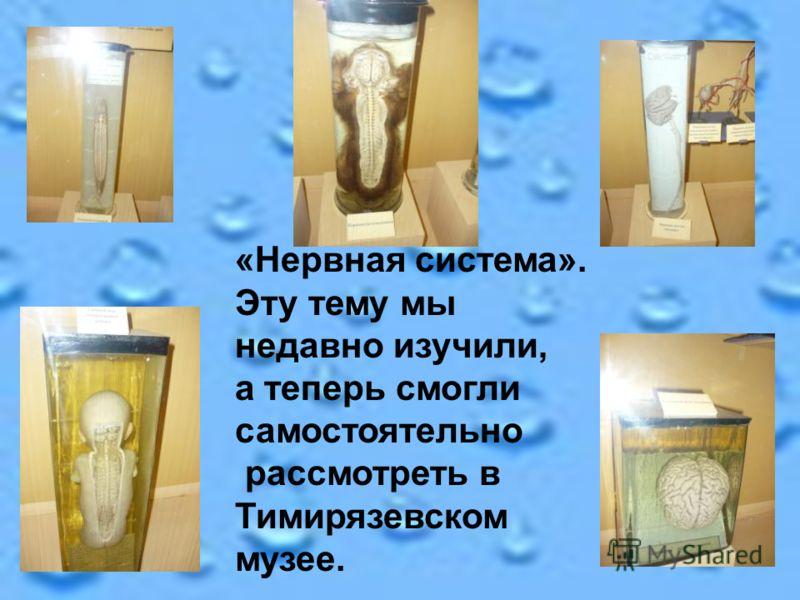 «Нервная система». Эту тему мы недавно изучили, а теперь смогли самостоятельно рассмотреть в Тимирязевском музее.