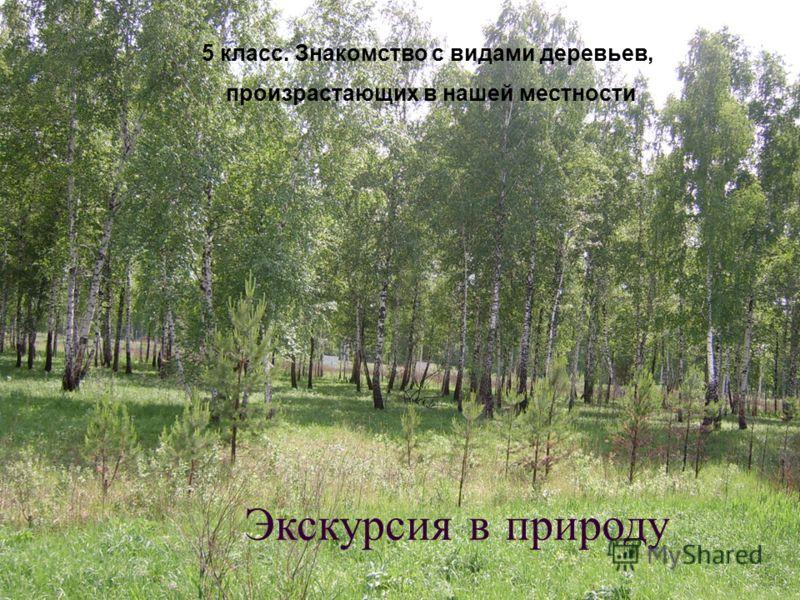 Экскурсия в природу 5 класс. Знакомство с видами деревьев, произрастающих в нашей местности