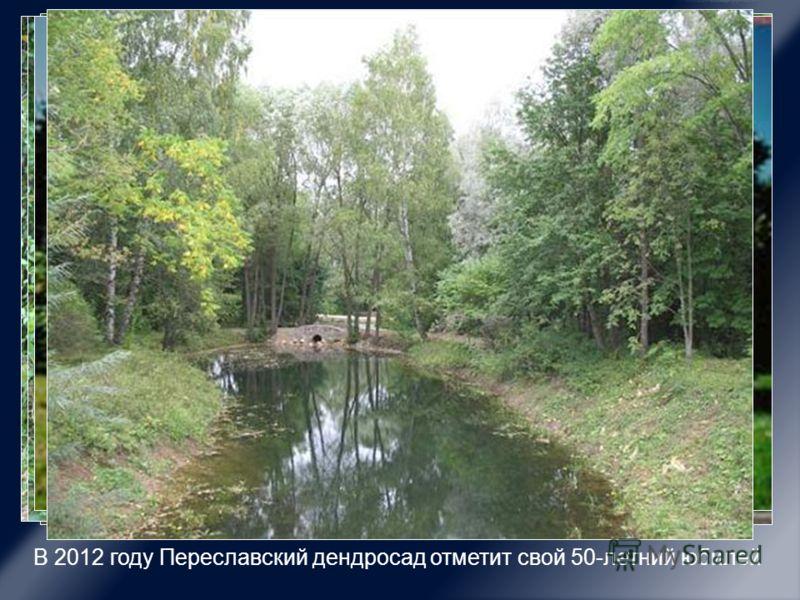В 2012 году Переславский дендросад отметит свой 50-летний юбилей