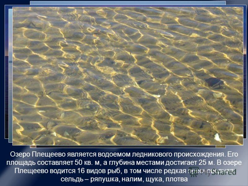 Озеро Плещеево является водоемом ледникового происхождения. Его площадь составляет 50 кв. м, а глубина местами достигает 25 м. В озере Плещеево водится 16 видов рыб, в том числе редкая пресноводная сельдь – ряпушка, налим, щука, плотва