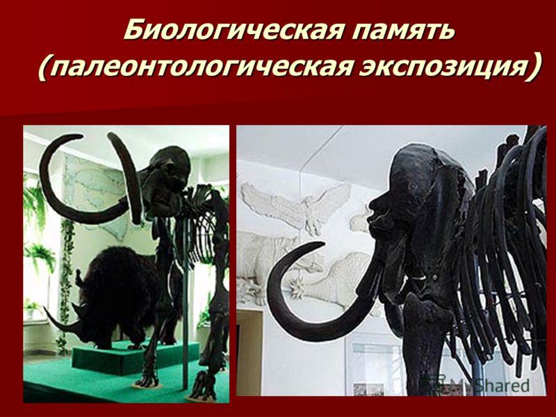Биологическая память (палеонтологическая экспозиция )