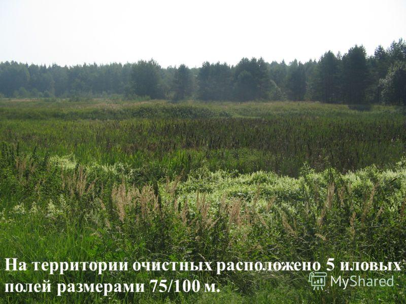 На территории очистных расположено 5 иловых полей размерами 75/100 м.