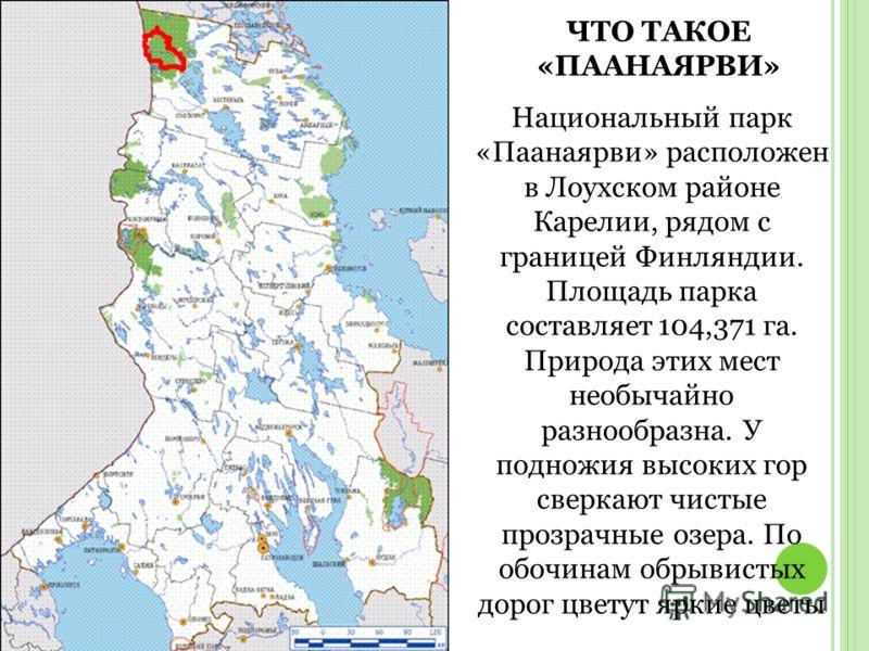 ЧТО ТАКОЕ «ПААНАЯРВИ» Национальный парк «Паанаярви» расположен в Лоухском районе Карелии, рядом с границей Финляндии. Площадь парка составляет 104,371 га. Природа этих мест необычайно разнообразна. У подножия высоких гор сверкают чистые прозрачные оз