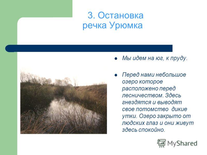 3. Остановка речка Урюмка Мы идем на юг, к пруду. Перед нами небольшое озеро которое расположено перед лесничеством. Здесь гнездятся и выводят свое потомство дикие утки. Озеро закрыто от людских глаз и они живут здесь спокойно.