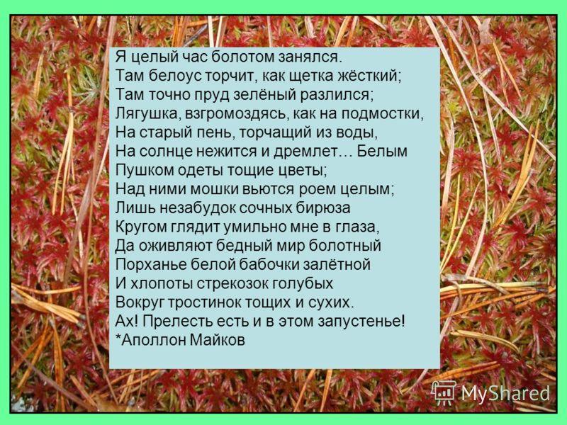 Я целый час болотом занялся. Там белоус торчит, как щетка жёсткий; Там точно пруд зелёный разлился; Лягушка, взгромоздясь, как на подмостки, На старый пень, торчащий из воды, На солнце нежится и дремлет… Белым Пушком одеты тощие цветы; Над ними мошки