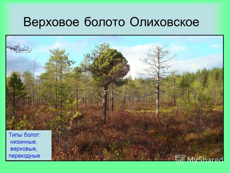 Верховое болото Олиховское Типы болот: низинные, верховые, переходные