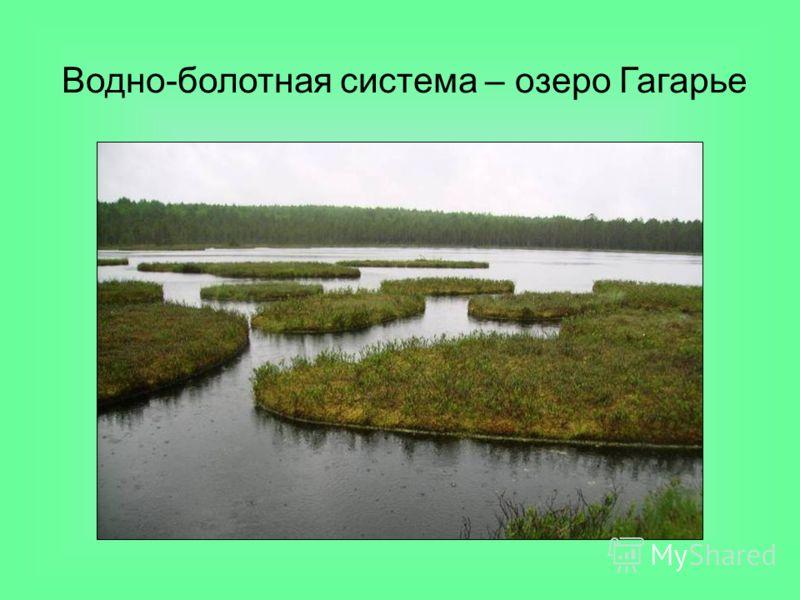 Водно-болотная система – озеро Гагарье