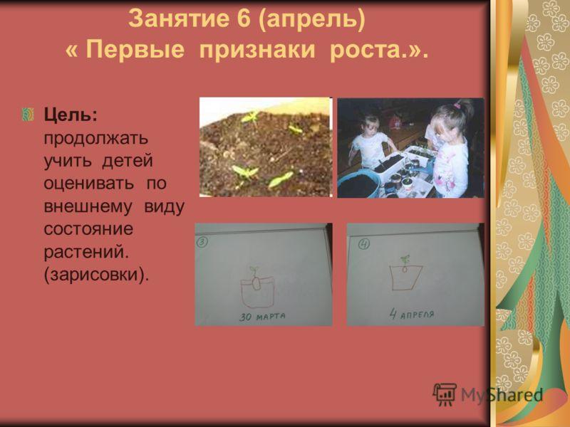 Занятие 6 (апрель) « Первые признаки роста.». Цель: продолжать учить детей оценивать по внешнему виду состояние растений. (зарисовки).