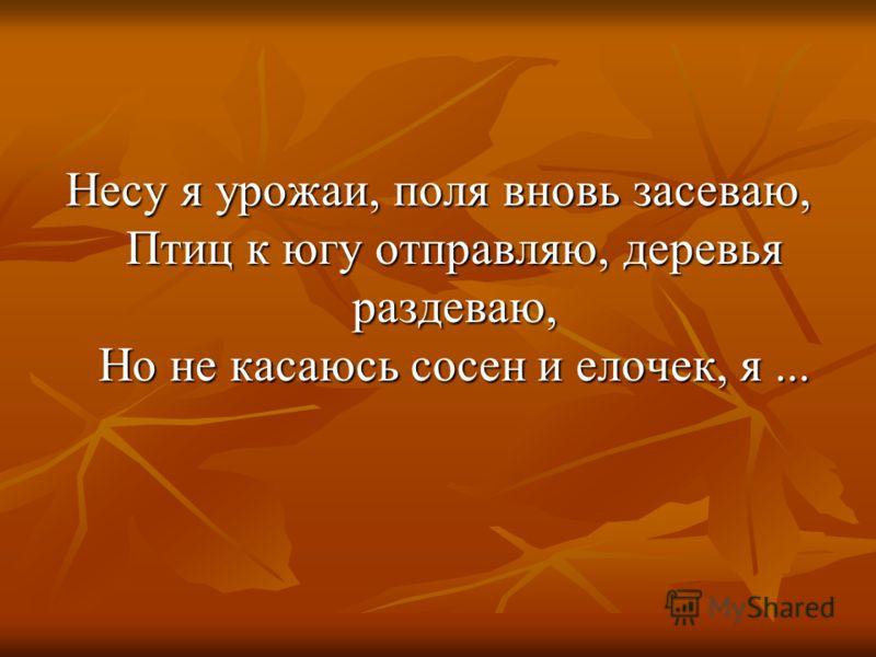Несу я урожаи, поля вновь засеваю, Птиц к югу отправляю, деревья раздеваю, Но не касаюсь сосен и елочек, я...