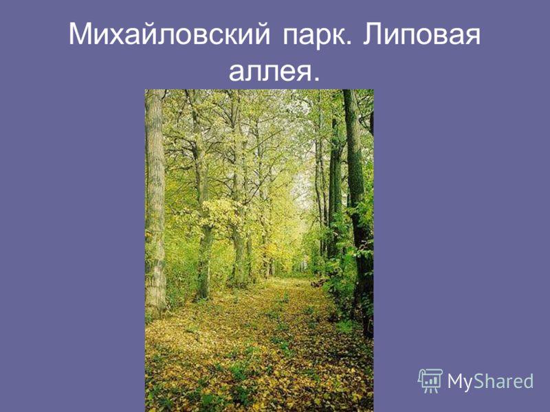 Михайловский парк. Липовая аллея.