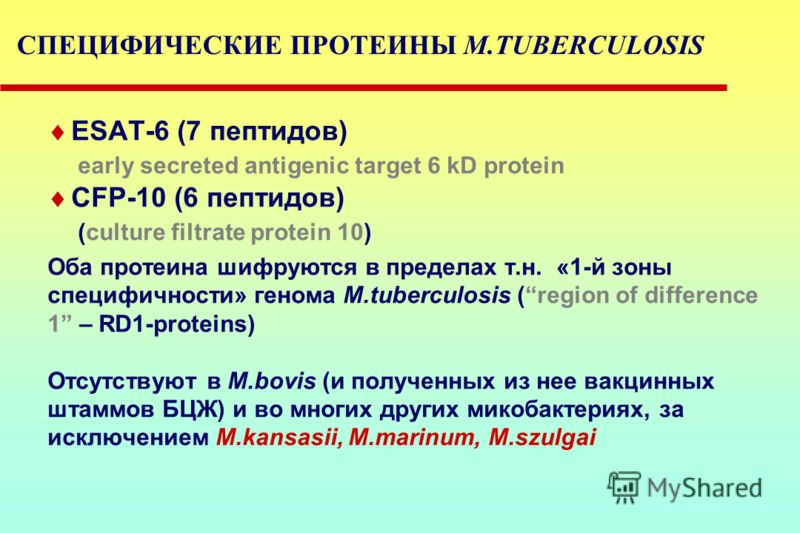 ESAT-6 (7 пептидов) early secreted antigenic target 6 kD protein CFP-10 (6 пептидов) (culture filtrate protein 10) Оба протеина шифруются в пределах т.н. «1-й зоны специфичности» генома M.tuberculosis (region of difference 1 – RD1-proteins) Отсутству