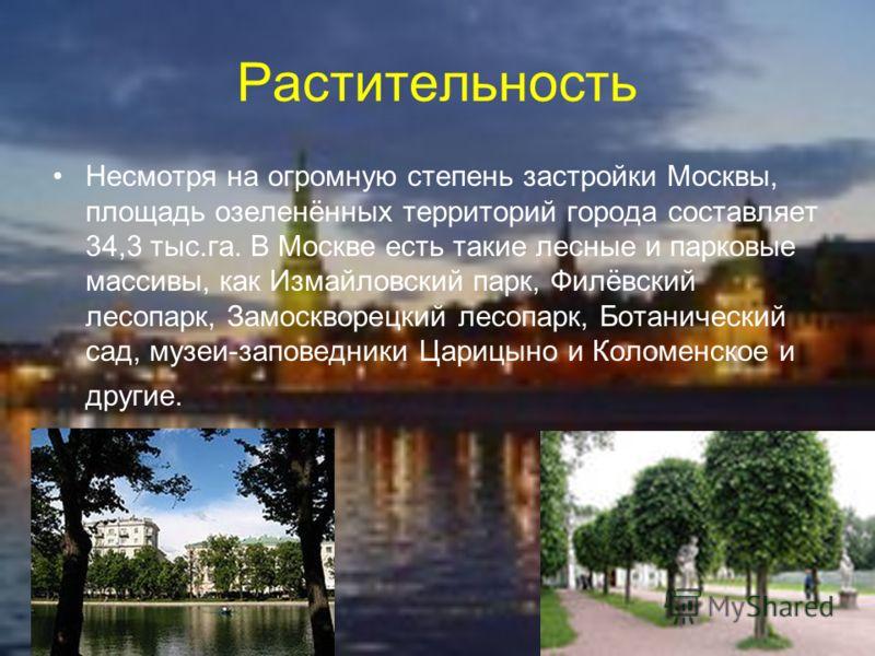 Растительность Несмотря на огромную степень застройки Москвы, площадь озеленённых территорий города составляет 34,3 тыс.га. В Москве есть такие лесные и парковые массивы, как Измайловский парк, Филёвский лесопарк, Замоскворецкий лесопарк, Ботанически