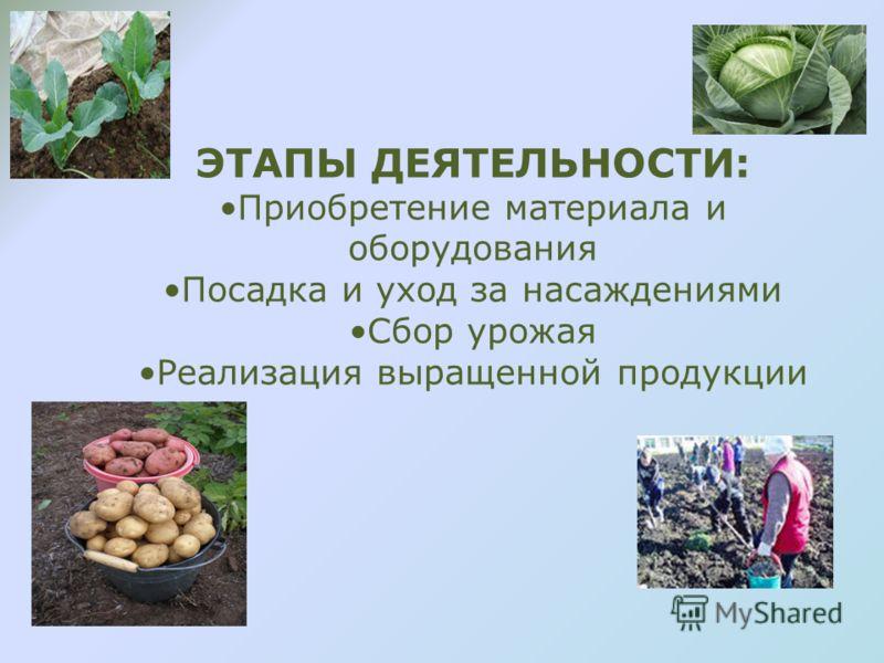 ЭТАПЫ ДЕЯТЕЛЬНОСТИ: Приобретение материала и оборудования Посадка и уход за насаждениями Сбор урожая Реализация выращенной продукции