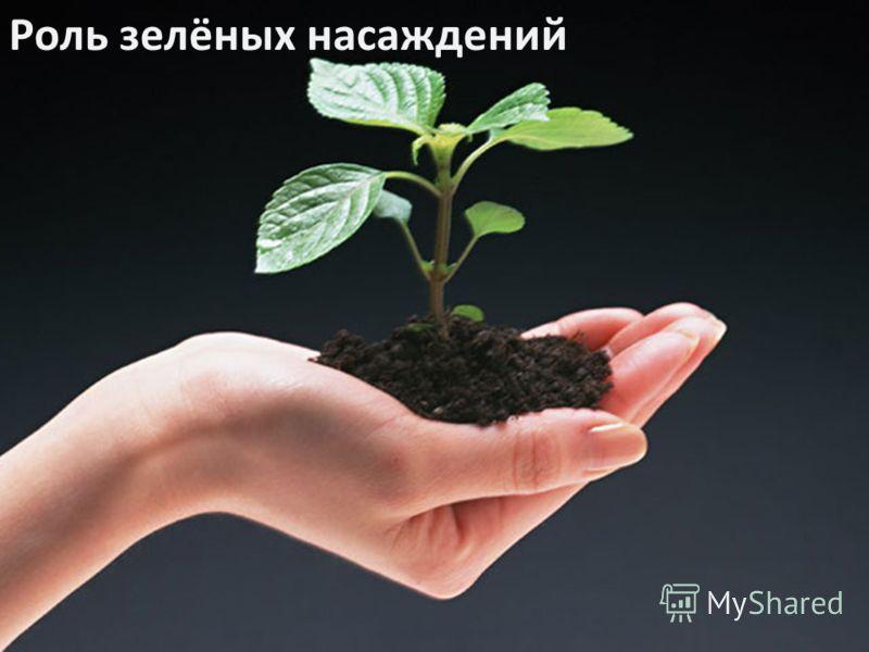 Роль зелёных насаждений