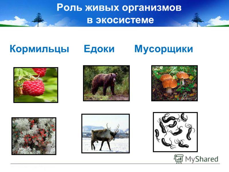 Роль живых организмов в экосистеме Кормильцы Едоки Мусорщики
