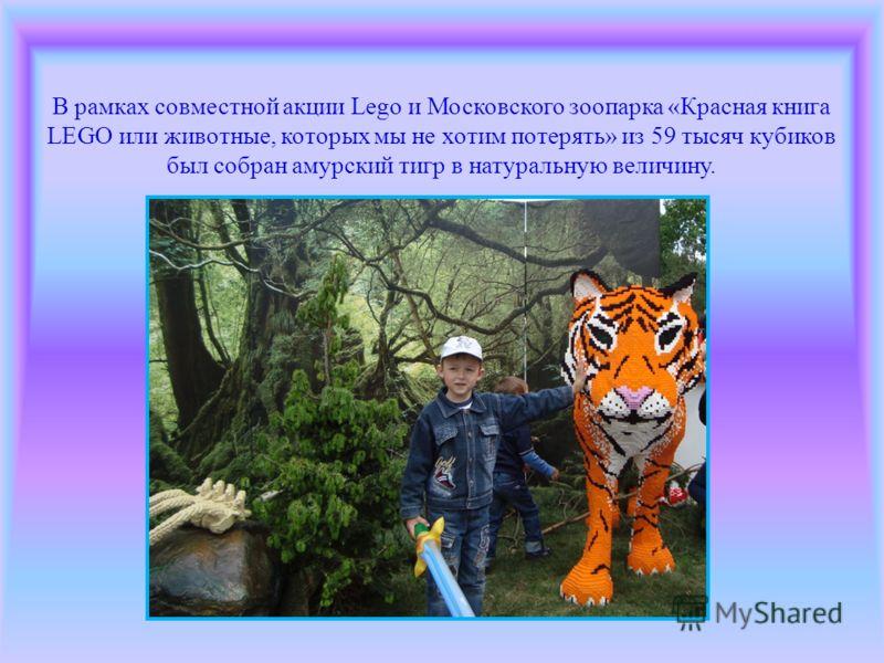 В рамках совместной акции Lego и Московского зоопарка «Красная книга LEGO или животные, которых мы не хотим потерять» из 59 тысяч кубиков был собран амурский тигр в натуральную величину.