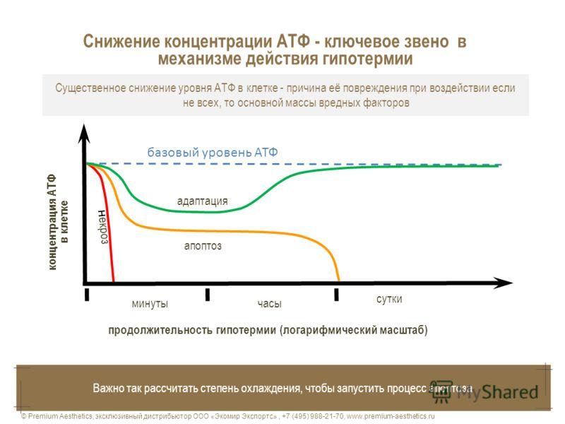 Существенное снижение уровня АТФ в клетке - причина её повреждения при воздействии если не всех, то основной массы вредных факторов продолжительность гипотермии (логарифмический масштаб) концентрация АТФ в клетке базовый уровень АТФ минутычасы сутки