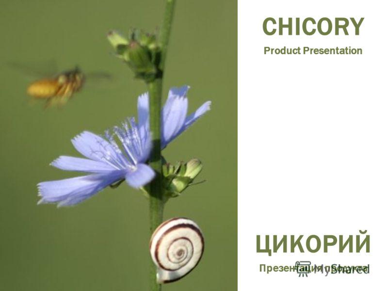 CHICORY Product Presentation ЦИКОРИЙ Презентация продукта