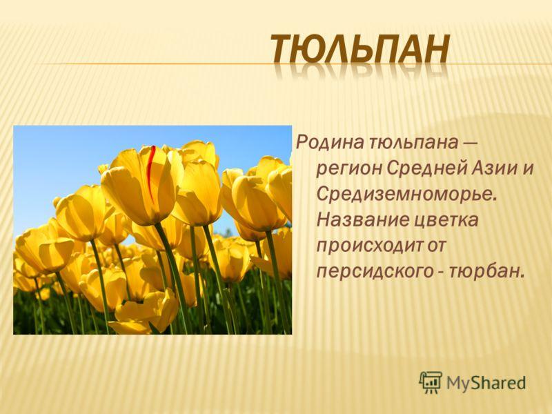 Родина тюльпана регион Средней Азии и Средиземноморье. Название цветка происходит от персидского - тюрбан.