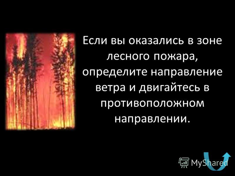 Если вы оказались в зоне лесного пожара, определите направление ветра и двигайтесь в противоположном направлении.