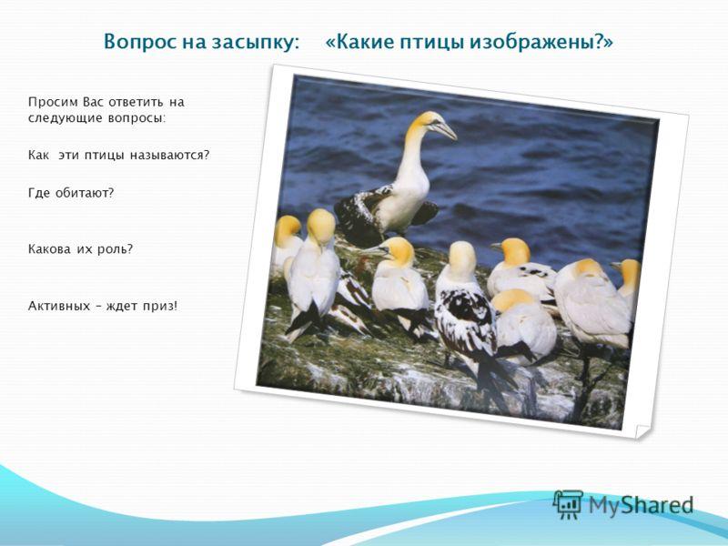 Вопрос на засыпку: «Какие птицы изображены?» Просим Вас ответить на следующие вопросы: Как эти птицы называются? Где обитают? Какова их роль? Активных – ждет приз!