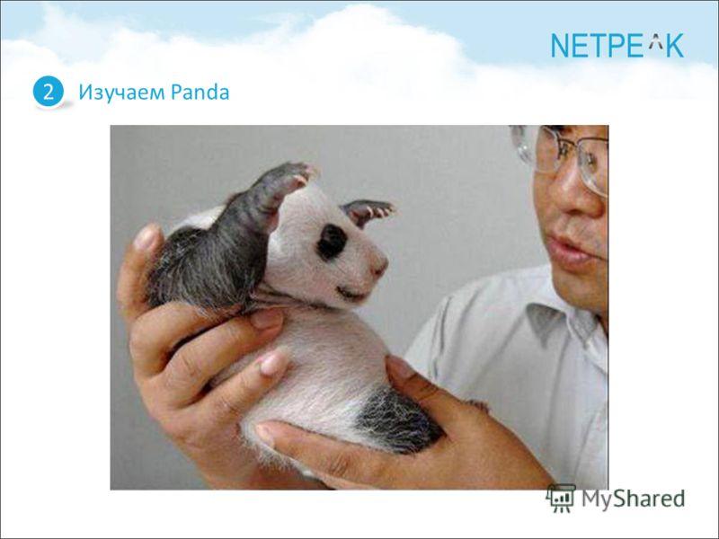Изучаем Panda 2