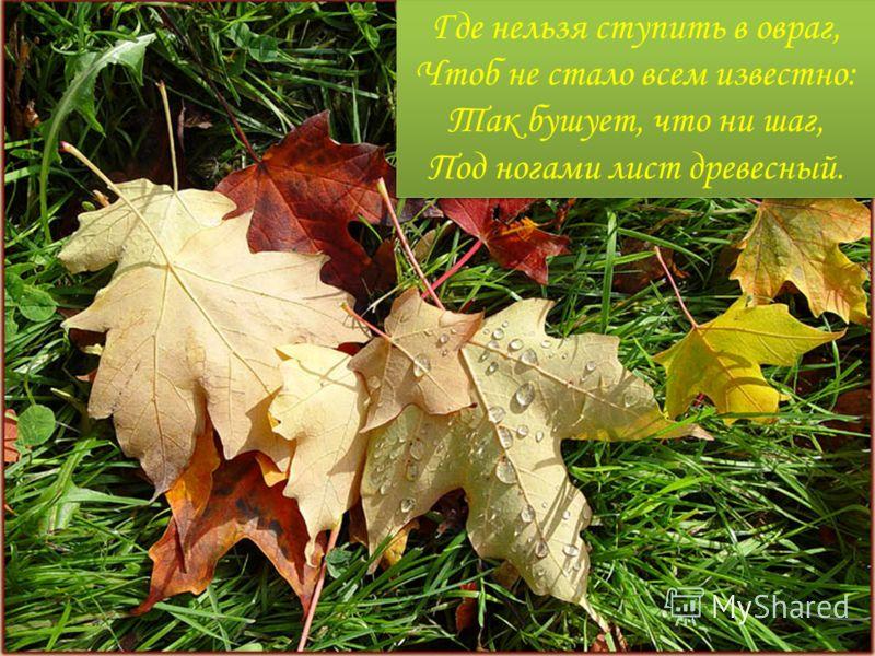 Где нельзя ступить в овраг, Чтоб не стало всем известно: Так бушует, что ни шаг, Под ногами лист древесный.